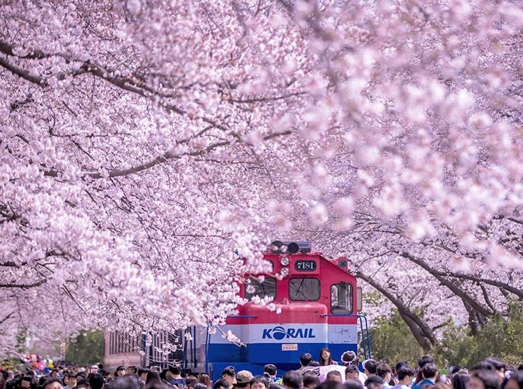 A Must-Try Experience In Korea During Spring